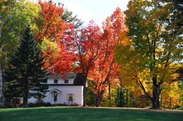 autumn village house in New England town with bright color in sunny day